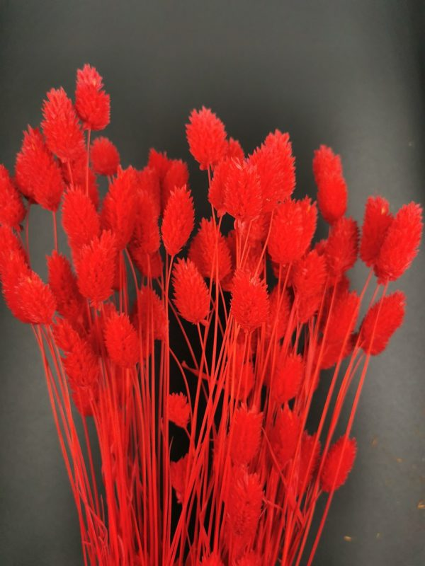 fénymag piros