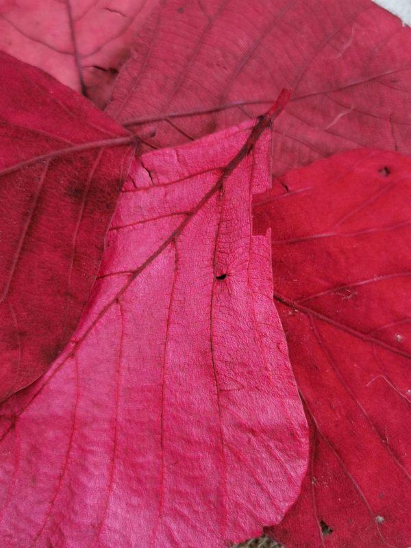 kobra levél piros