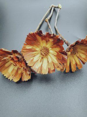protea rozetta2