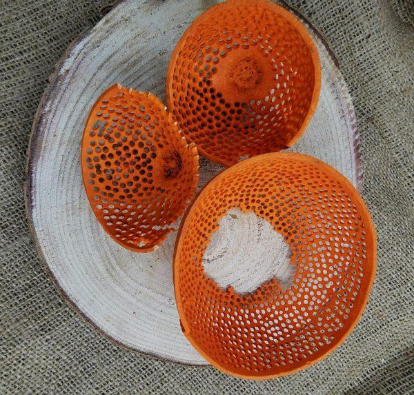 tésztaszűrő narancs