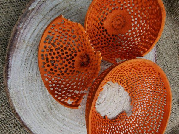 tésztaszűrő narancs2